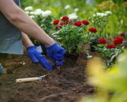 Оформление клумбы с розами — оригинальный цветник своими руками