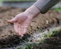 Как определить тип почвы на дачном участке — способы улучшения состава грунта