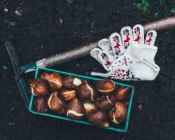 Посадка осенью луковичных цветов