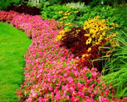 Низкорослые цветы для клумбы — создаем цветник своими руками