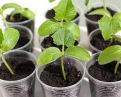 Идеальная температура для рассады: какой должна быть температура для рассады разных овощных культур, что важно для правильного всхода