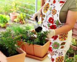 Простая подкормка для комнатных цветов, ускоряющая их рост