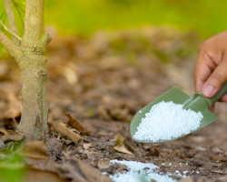 Мочевина (карбамид) — удобрение: применение на садовом участке, правила использования, для чего нужна