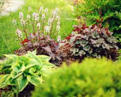 Клумба непрерывного цветения, или Как сделать сад цветущим весь сезон