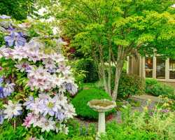 Сад, не требующий особого ухода