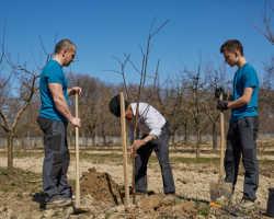 Подкормка деревьев весной — изучаем правила внесения удобрения