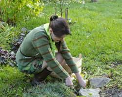 Сорняки портят газон, как с этим бороться?