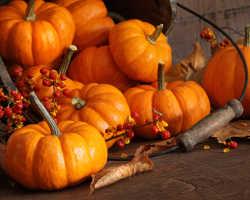 Тыква: факты об овоще, посадка, использование