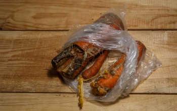 Болезни, которые угрожают моркови при хранении: как спасти урожай?