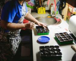 Выбор сортов семян перцев и баклажанов в соответствии с климатической зоной