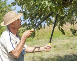 Обрезка яблонь летом — обрезаем молодые и старые деревья