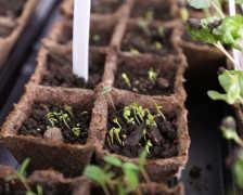 Не позвольте своей рассаде заболеть: основные способы сохранения урожая