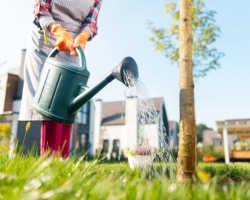 Уход за плодовыми деревьями в саду весной, летом и осенью