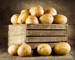 Советы по посадке картофеля из семян