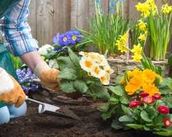Здоровье сада: советы по сохранению
