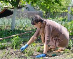 Борьба с сорняками: как победить эти назойливые растения