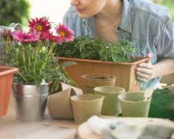 Комнатные растения: раскрываем секреты обильного и продолжительного цветения