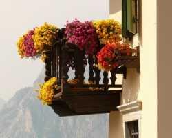 Выращивание цветов на балконе