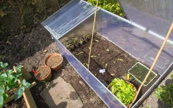 Укроп, петрушка, сельдерей круглый год — выращивание в теплице