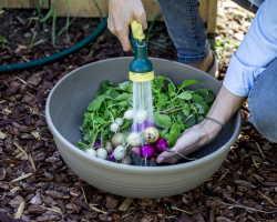 Выращивание редиса с помощью кипятка