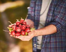 Советы по выращиванию редиса в контейнере