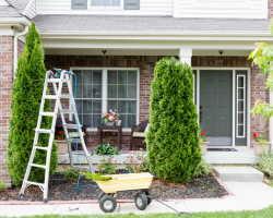 Подкормка хвойных – несколько правил, чтобы не причинить вред растениям