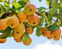 Секреты успешного садоводства: как добиться высокой урожайности плодовых культур