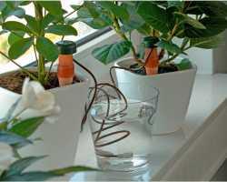 Автоматический полив комнатных растений — как организовать правильно