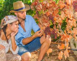 Мильдью на винограде – как проводить обработку кустов?