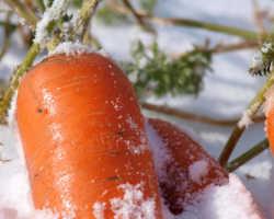 Как дачнику защитить урожай при внезапных заморозках: на что обратить внимание в первую очередь