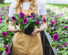 Как вырастить петунию из семян – беспроигрышный способ