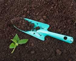 Органическое садоводство: понятие, советы