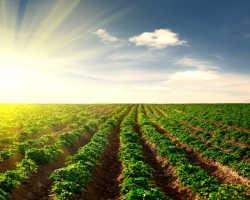 Правила ухода за картофелем в летнее время года