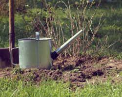 Как правильно организовать весеннюю подкормку плодовых деревьев