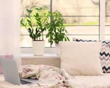Замиокулькас — выращивание и уход