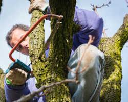 Правила летней обрезки яблонь. Простые советы опытных садоводов