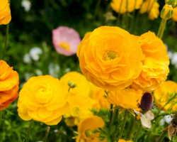 Многолетние цветы для дачи — выбор за вами