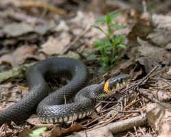 Как избавиться от змей на участке: безопасный и доступный способ
