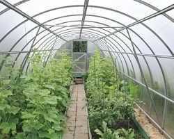 Главные ошибки при выращивании огурцов в теплице