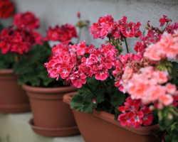 Магия комнатных цветов. Красивые домашние растения, дарящие положительную энергетику