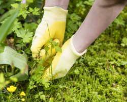 Как избавиться от сорняков на участке при помощи народных средств