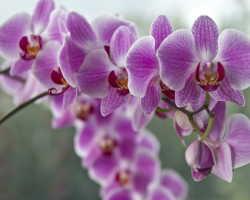 Как я ухаживаю за моими прекрасными Орхидеями. Делюсь своими секретами и наблюдениями