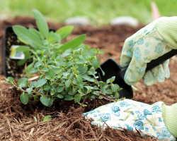 Самые распространённые ошибки, которые допускают начинающие садоводы