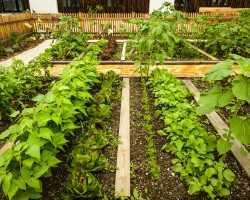 Огородное дело для новичков