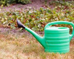 Способы увеличения урожайности клубники