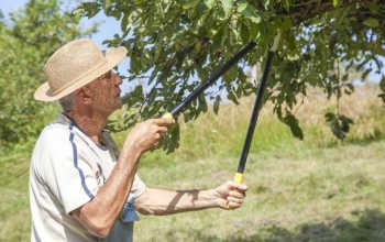 Как правильно выполнять обрезку фруктовых деревьев весной и осенью