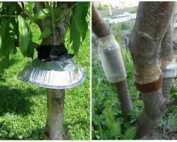 Защитный ловчий пояс, рекомендуемый для деревьев: как сделать, когда и как правильно накладывать?