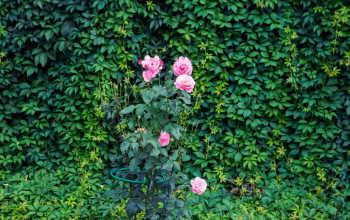 Живая изгородь: как выбрать растения и избежать ошибок при их высаживании