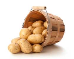 Топ-5 сортов картофеля для сибирских дачников