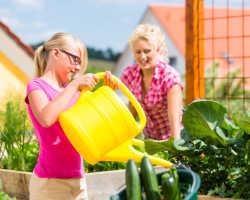 Хорошо польешь — урожай огурцов соберешь
